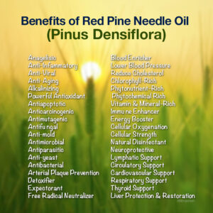 Benefits of Pinus densiflora